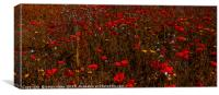 A field of red  flowering poppies  inCornwall , Canvas Print