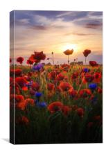 Poppies Sun, Canvas Print