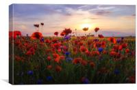 Poppies Sunset, Canvas Print