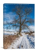 Snowy Lane and Ash Tree Silhouette, Canvas Print