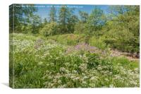 Teesdale Wild Flowers, Canvas Print