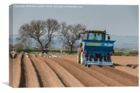 Spring Potato Sowing, Canvas Print