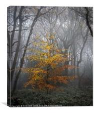 The Golden Beech, Canvas Print