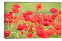 spring scene with red poppy field, Canvas Print