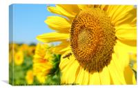 summer scene with bee and sunflower, Canvas Print