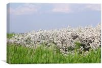 meadow with green grass and white flower, Canvas Print