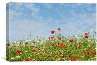 wild flowers meadow and blue sky, Canvas Print