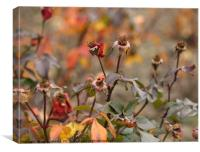 garden with wilted roses nature background, Canvas Print