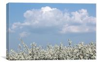 tree branches with white flowers spring season, Canvas Print