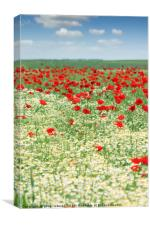 spring meadow with wildflowers and blue sky, Canvas Print