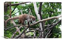 coati standing on tree branches, Canvas Print