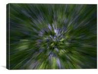 Bluebell Explosion, Canvas Print