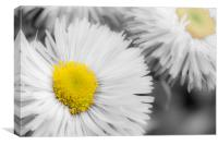 Yellow Daisy Abstract Print, Canvas Print