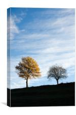 Two trees in autumn, Canvas Print