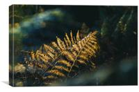 A close up of bracken back lighted by beautiful go, Canvas Print