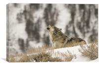 Wolf Howling, Canvas Print