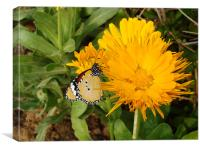 Butterfly on a yellow flower.... , Canvas Print