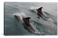Two Dolphins, Canvas Print