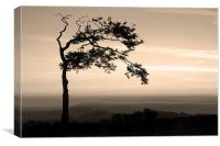 Windswept at Mow Cop, Canvas Print