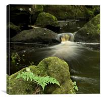 Ferns and Falls, Canvas Print