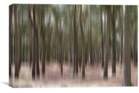 Pine Trees at Formby, Canvas Print