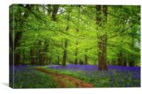 Bluebells at Lawton, Canvas Print