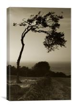 Windswept Tree, Canvas Print