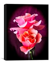 Pink and Orange Rose Blossoms, Canvas Print