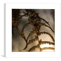 Summer Leaf , Canvas Print