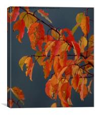 winter red, Canvas Print
