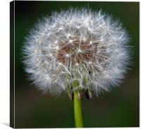 THE INTRICACY OF NATURE, Canvas Print