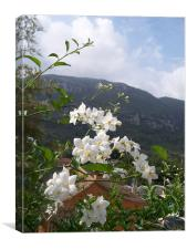 Jasmine With Mountains Beyond, Canvas Print