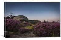 Heather in Bloom at Millstone Edge, Canvas Print