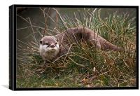 Otter in the Grass, Canvas Print