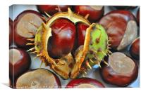 The ruler of conkers, Canvas Print
