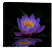 Water Lilly, Canvas Print