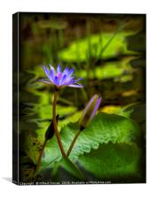 Beautiful Water Lilies, Canvas Print