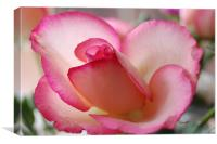 lovely rose, Canvas Print
