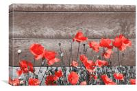 Red Urban Poppies, Canvas Print