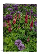 Allium and Lupin, Canvas Print