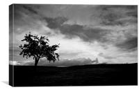 Lonley Tree !!!, Canvas Print