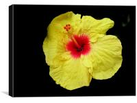 flower Jawa, Canvas Print