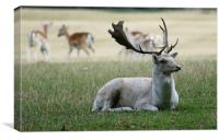 The White Stag, Canvas Print