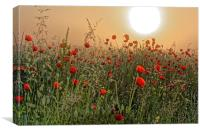 poppy field in the morning, Canvas Print