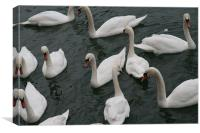 Swans in the docks , Canvas Print