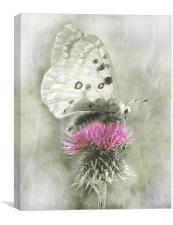 Dreamy Butterfly, Canvas Print