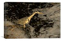 Heron by the River Ness, Canvas Print
