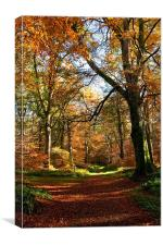 Autumn in Cawdor Woods, Canvas Print