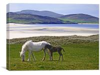 Mare and Foal at Luskentyre, Canvas Print