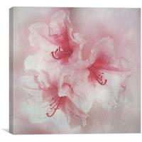 Floral Fragility, Canvas Print